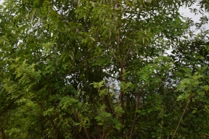 Foot hills of Chorla Ghats