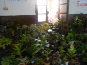 Potted plants display