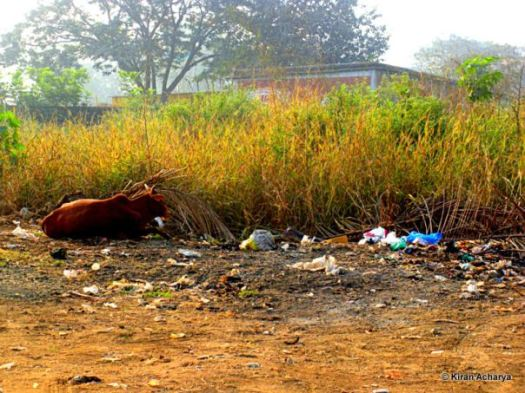 A long way to swachh India