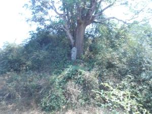 Barkuru fort-7-2 (1)