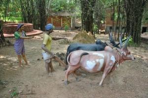 traditional occupation farming