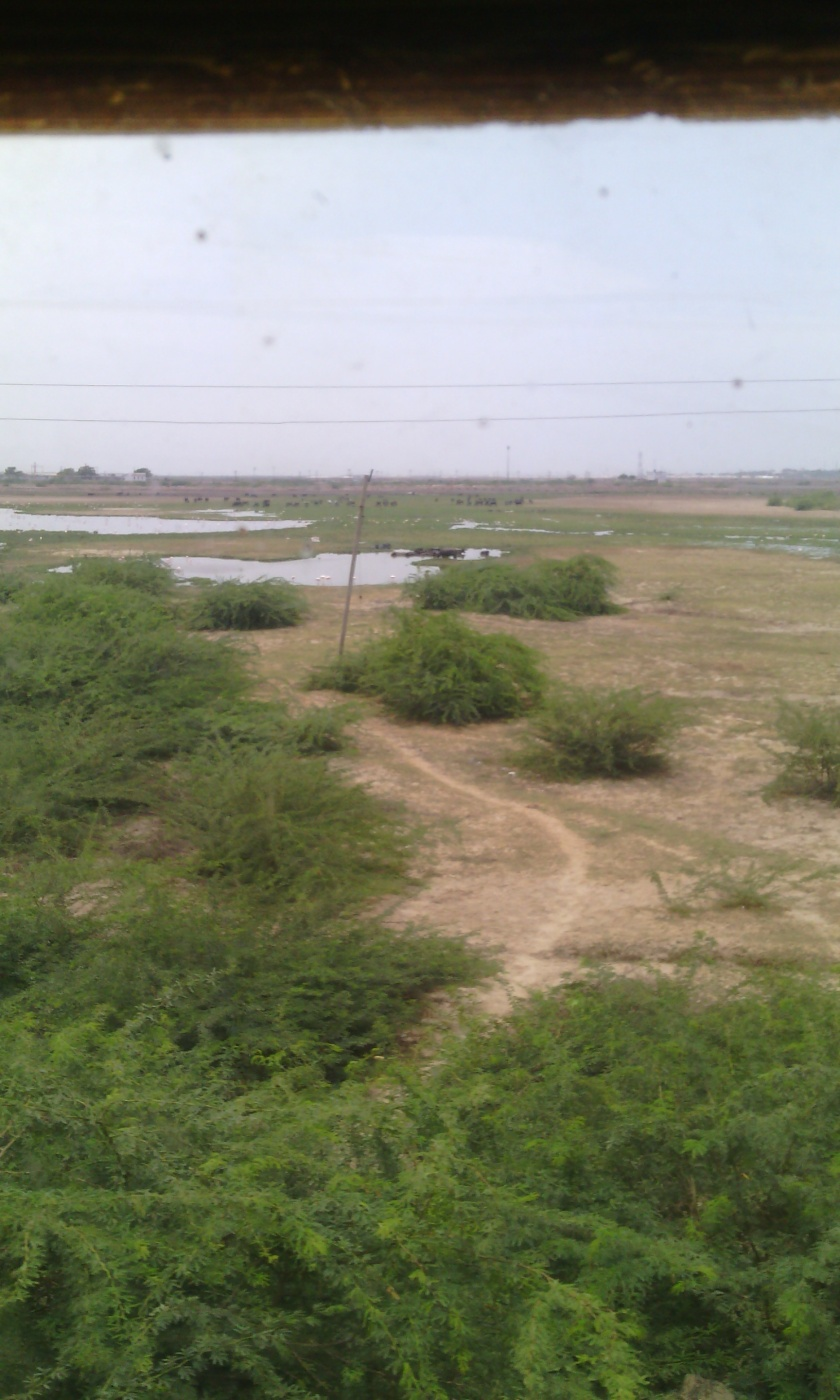 jamnagar (7)