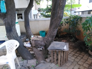 tree house pune