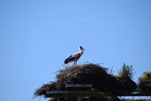 migratory birds (1)