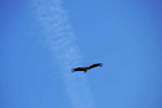 migratory birds (2)