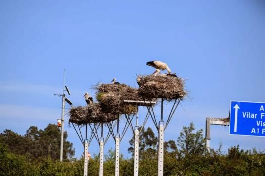 migratory birds (3)