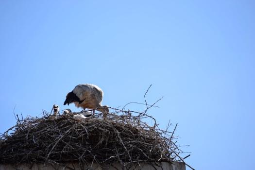 migratory birds (4)